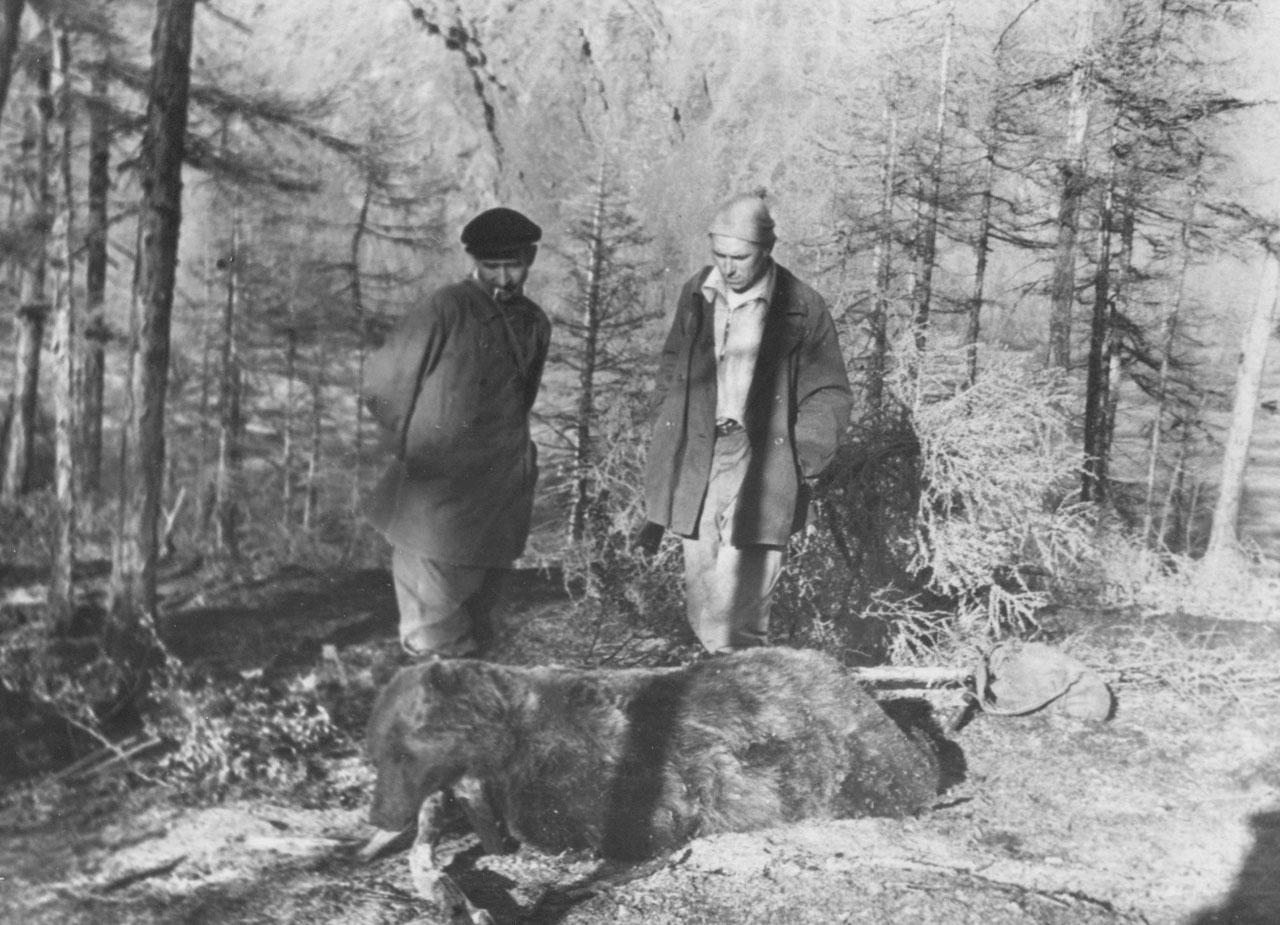 Мертвый медведь, задравший геолога. Фото из архива Елены Афанасьевой-Демчук.