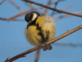 bird_bolshaya_sinitsa