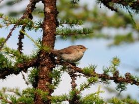 bird_buraya_penochka