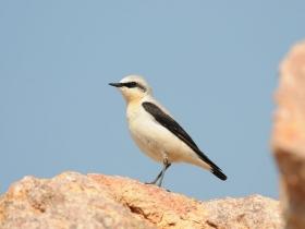 bird_kamenka