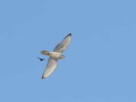 bird_krechet