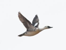 bird_lutok