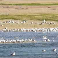 Моевки, устье реки Ола, 18.07. 2012 год.