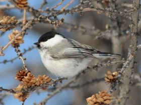bird_pukhlyak