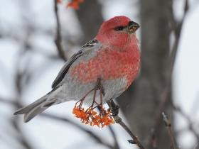 bird_shchur