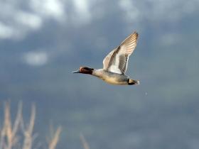 bird_svistunok