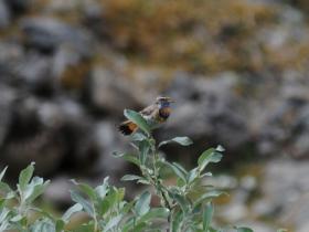 bird_varakushka