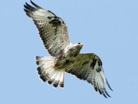 bird_zimnyak