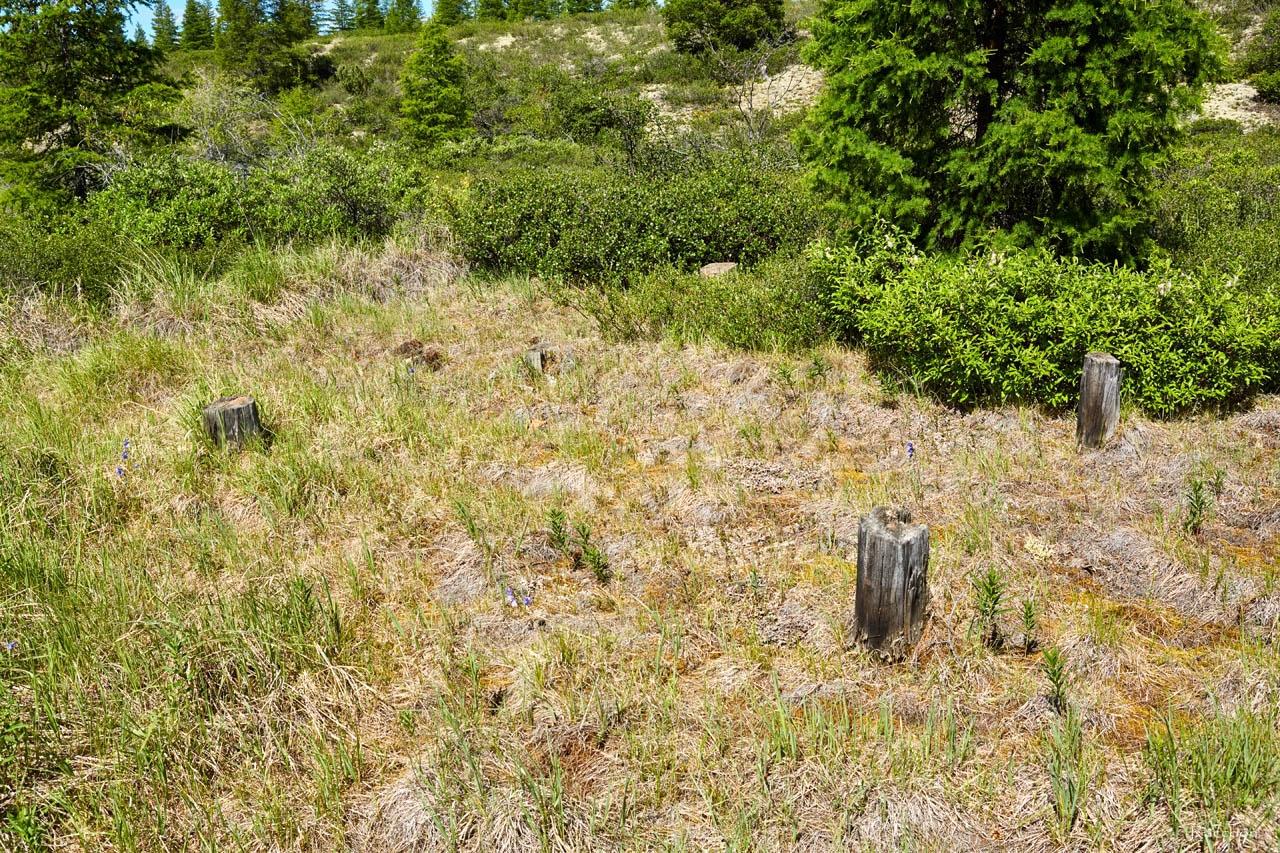 На этом месте, предположительно, стояла караульная вышка. В одном из распадков в долине Хеты. Июль. 2017 года.