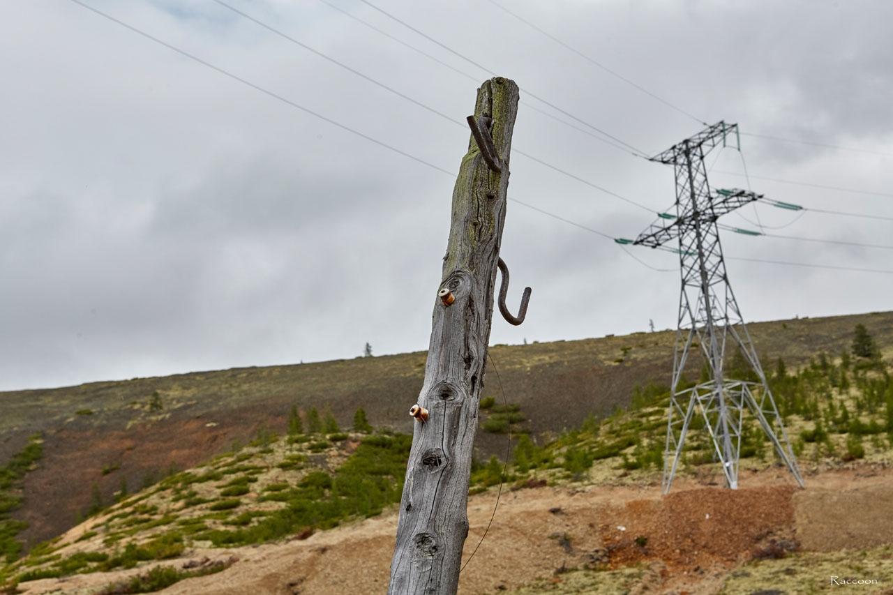Опора линии электропередач. По этим столбам проходило не только электричество, но и связь. Хета. 2017 год.