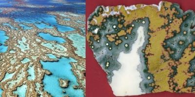 Большой Барьерный Риф. Океаническая яшма, Австралия.