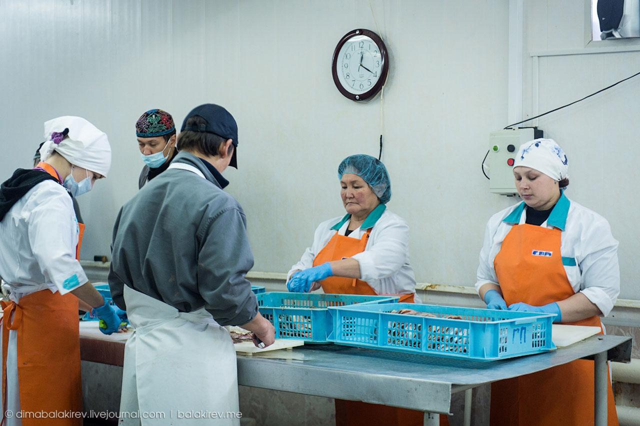 На рыбоперерабатывающем заводе в селе Гадля «Тандем».