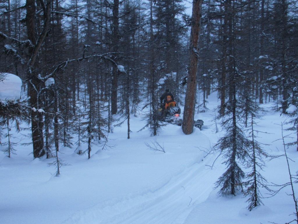 Путик по лесу.