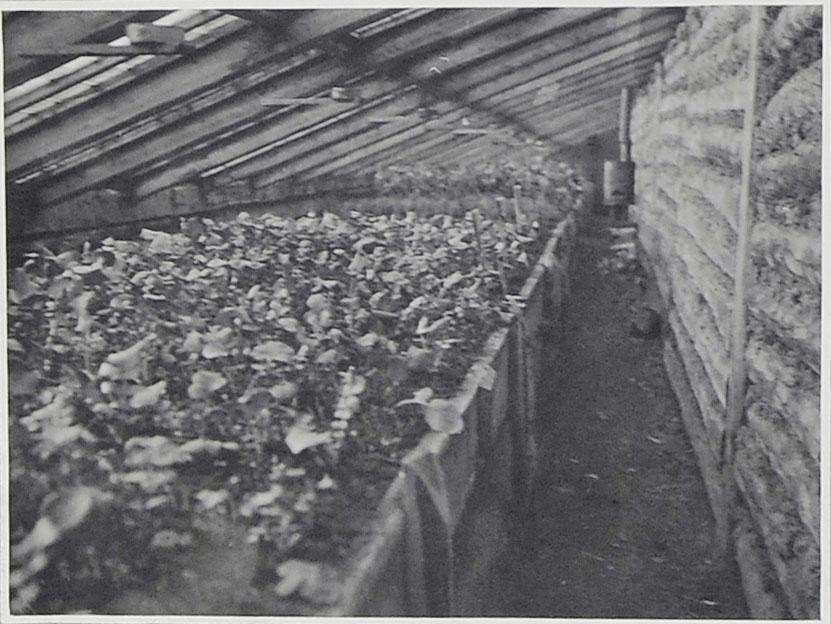 Внутренний вид теплицы. 1932 год.