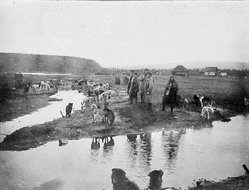 Ола. Ездовые собаки Дальстроя, 1932 год.
