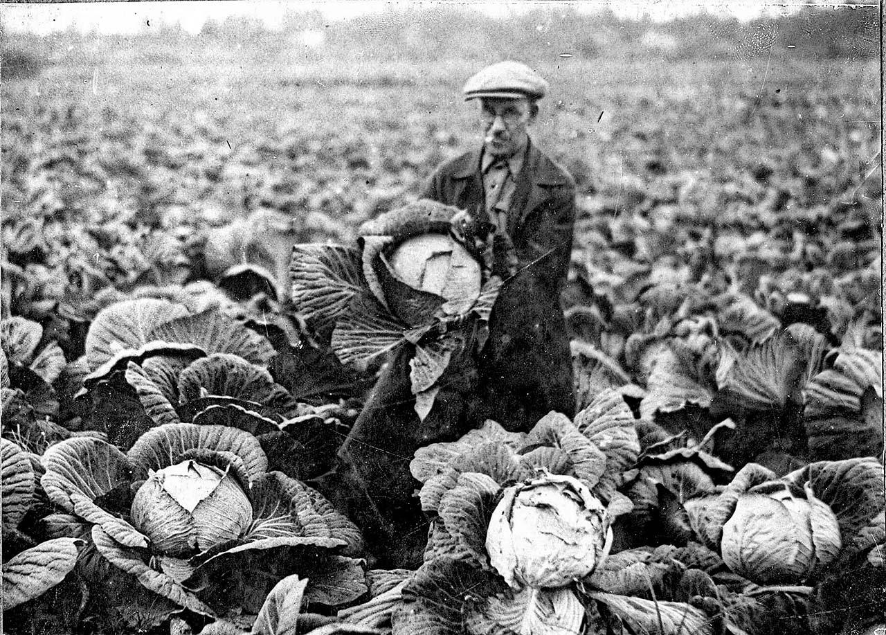 Балаганное. Плантация капусты. 30-е годы.