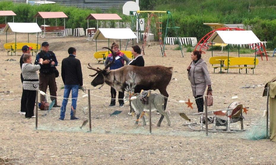 Оживляет этноуголок северный олень, кажется, наш старый знакомый Батон из крестьянско-фермерского хозяйства «Эвелина»