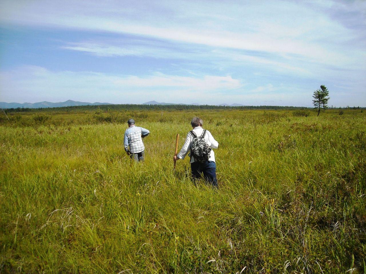 По торфяному болоту. Фото В. Глотова.