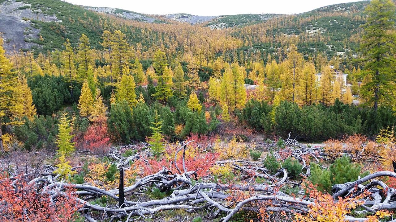 Колымский лес в осеннем наряде.