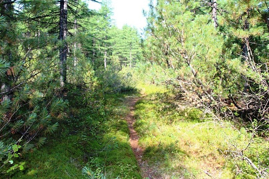 Экологическая тропа. Лосовский лес.