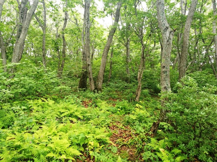 Приморский лес похож на сказку. 2017 год.