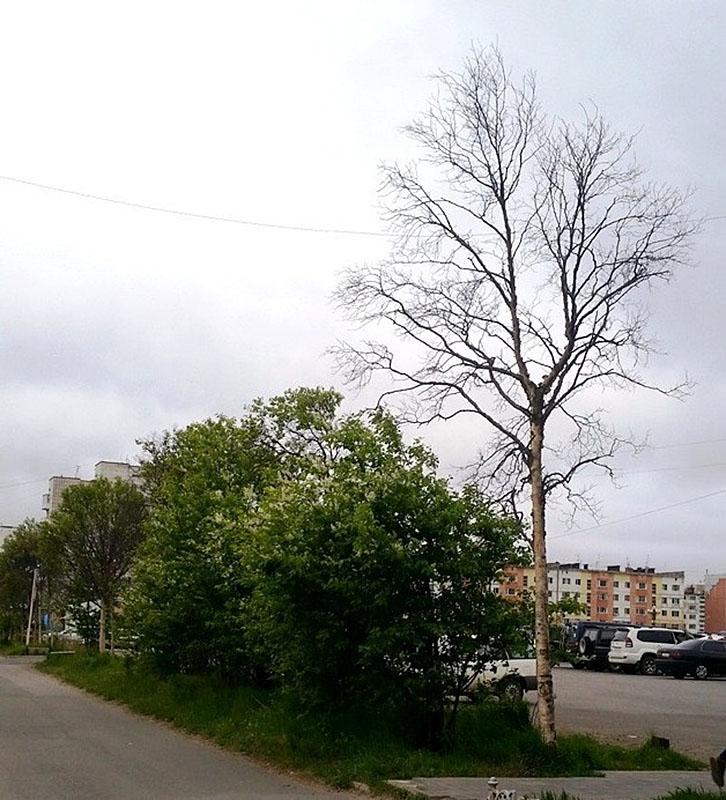 oseneva_pitomnik_005