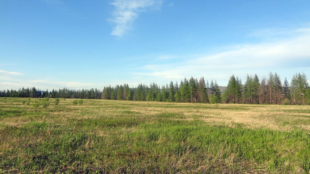 Когда-то эти поля принадлежали совхозу «Талая». Фото из архива Елены Полищук. 2018 год.