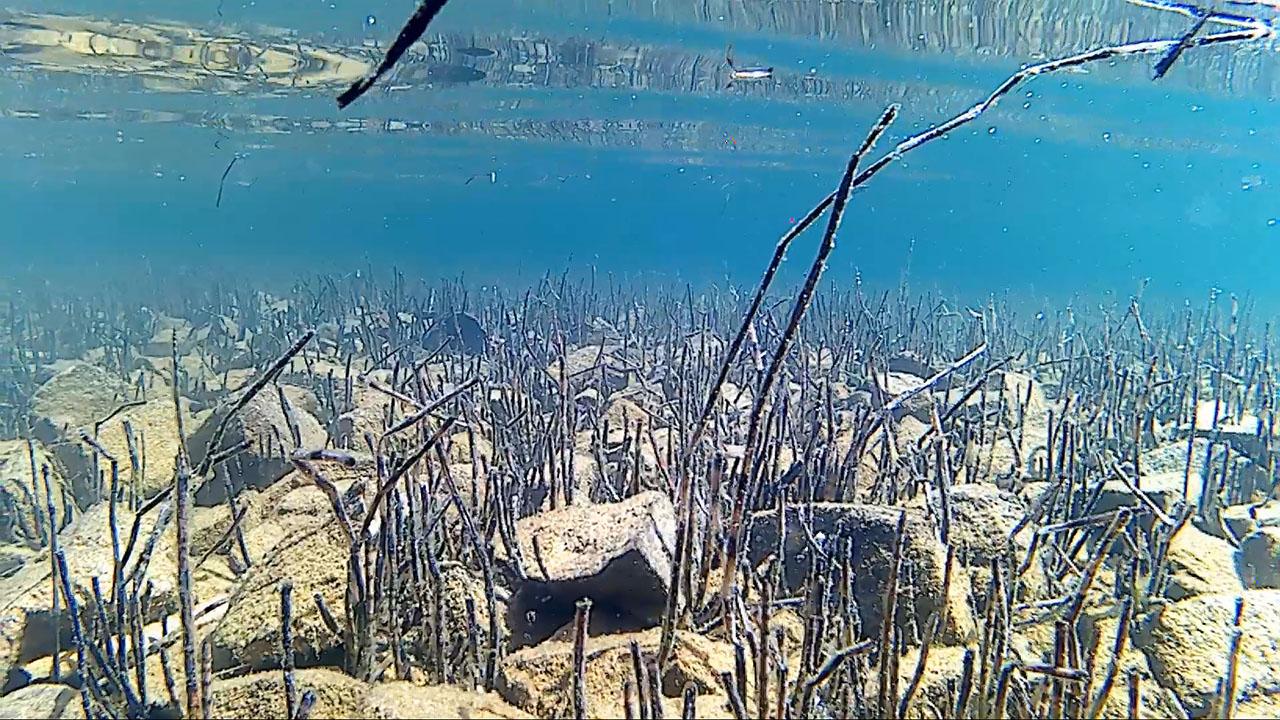 Подводный мир озера Галитур. Из архива Елены Полищук. 2018 год.