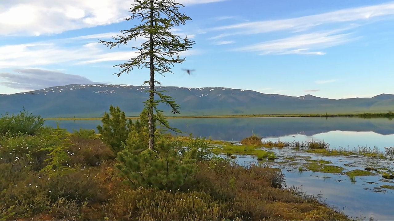 Как бы ни фотографировала озеро, в кадр обязательно попадают снующие комары.