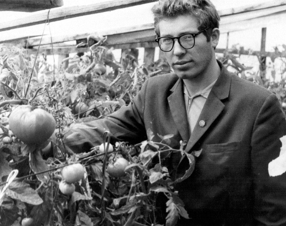 Сибик-Тыэллах. Вот такие вырастали помидоры в теплице.