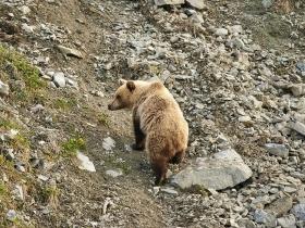 uchuev_bear