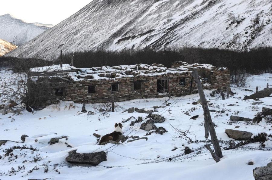 Остатки лагерных строений Бутугычага 2010 г.