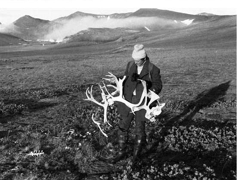 Юнга с останками северных оленей.
