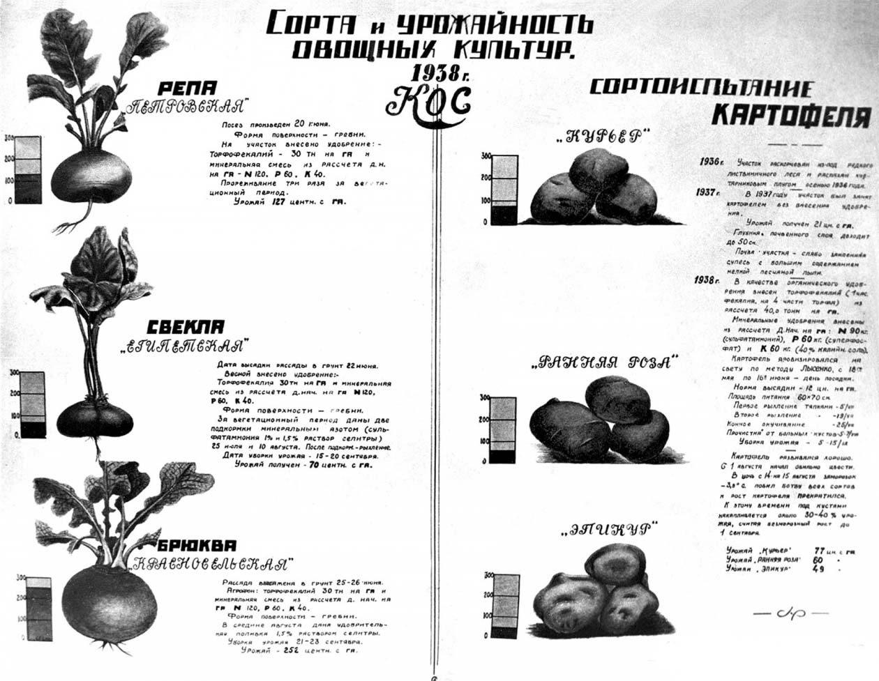 Сорта и урожайность овощных культур. КОС. 1938 год. Из архива Ивана Паникарова.