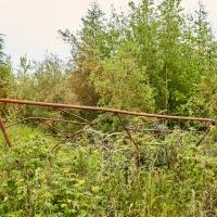 Все следы человека здесь быстро зарастают молодыми деревьями и кустарником. Усть-Таскан. 2017 год.