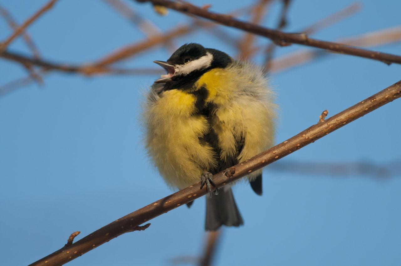 перо картинки воробьинообразных птиц менее
