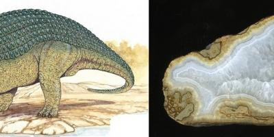 Nodosaurus. Агат, кварц, Ольское плато.