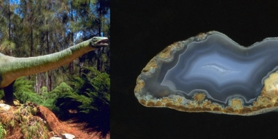 Бронтозаврик. Агат, Ольское плато.