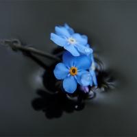 gallery_pitnet_ru_1408240962