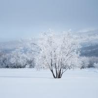 gallery_pitnet_ru_1424252844