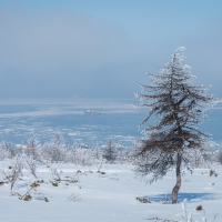 gallery_pitnet_ru_1430188584